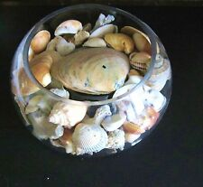 Sea Shells in a Clear Glass Centerpiece Display Bowl.