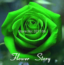 200 pcs Green Rose Seeds DIY Potted or Yard Flower Plant