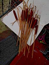 23 REAL Dried CATTAIL's for SEED, CRAFTING, HOME, or OFFICE 2 ft tall