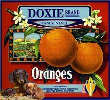 Marshall Canyon Doxie Dachshund Dog Orange Citrus Fruit Crate Label Art Print