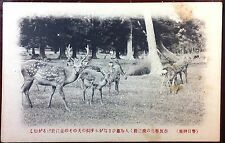 Early 1900's Japanese Postcard Sika Deers at Forest Japan