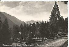 160373 BERGAMO SCHILPARIO - PINETA Cartolina FOTOGRAFICA viaggiata 1953