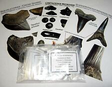 Cretaceous Shark ray fish tooth fossil collection 14 sp Squalicorax Frankstown