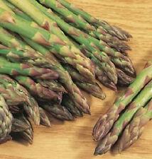 1,000 Asparagus Seeds Mary Washington Seeds Asparagus BULK SEEDS