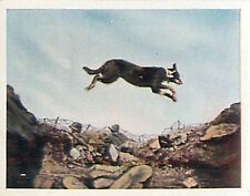 German Soldiers Dog Trench France War Deutsches Heer WWI WELTKRIEG 1 CHROMO
