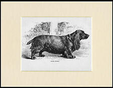 FIELD SPANIEL ANTIQUE 1900 DOG PRINT MOUNTED READY TO FRAME