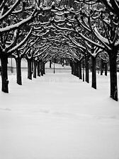 WINTER TREE Avenue NEVE FOTO art print poster foto bmp2402a