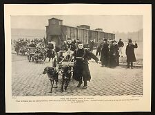 1934 Dog Print / Bookplate - Belgian Army, Transport Corps, Dogs & Carts, France