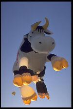 528091 Vaca Globo En Vuelo A4 Foto Impresión