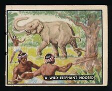1950 Topps BRING 'EM BACK ALIVE -#83 A Wild Elephant Noosed