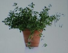 THYME HERB* 100 SEEDS* GOURMET * CULINARY *
