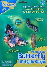 Outdoor learning Insect Lore plastic  BUTTERFLY life cycle 4 stages