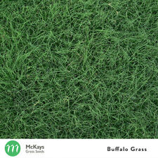 McKays Buffalo Grass Seed Blend (50%) 1kg - Lawn Seed Free Postage