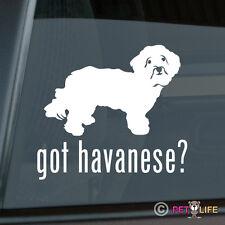 Got Havanese Sticker Die Cut Vinyl - blanquito v2