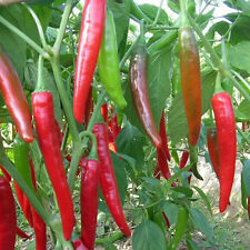 Hot Sale 10Pcs Home Giant Spices Red Spicy Chili Pepper Seeds Vegetable Plant