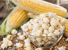 Popcorn Seeds - CREME PUFF - Grow Your Own Popcorn - Zea Mays - 200 Seeds