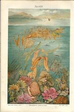 Stampa antica ALGHE MARINE Algen PAESAGGIO con MARE 1890 Old antique print