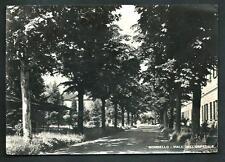 Mombello ( Varese ) : Viale dell'Ospedale - cartolina viaggiata nel 1951