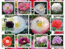 1000 Graines de fleurs Annuelles, PAVOT Différentes variétés en Mélange, Papaver