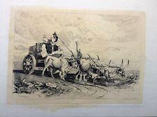 CAMPAGNA ROMANA;C. COLEMAN, acquaforte 1850. TAVOLA  Paludi Pontine;carro buoi