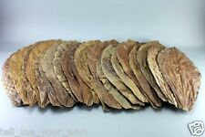 20 pcs Ketapang Catappa Indian Almond Leaves for shrimp betta discus cichlid