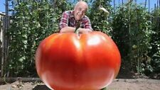 15 GIANT TOMATO SEEDS 2016 OVER 7LBS POSSIBLE!