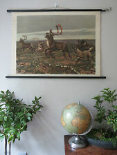VINTAGE PULL DOWN SCHOOL CHART OF  WOLF PACK HUNTING STAG BY M.A KOEKKOEK