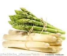 Spargel grün und weiß * 40 Samen * gesunde Delikatesse * Kultur für 10-20 Jahre