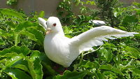 Feather White Flying Realistic PIGEON Bird Taxidermy Barred Furry Animal Unique