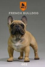 1:6 Mr.Z Animal Model 002 French Bulldog VOL.5 Collection Display Toy Gifts