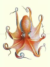 PAINTING ZOOLOGY OCTOPUS MARINE ANIMAL COOL TENTACLE ART POSTER PRINT LV2984
