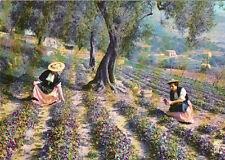 TOURRETTES-sur-LOUP cueillette violettes femmes costume traditionel timbrée 1992