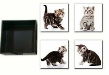 Cat Coaster - Set of 4 Different Ceramic Grey Tabby Kittens with Keepsafe box