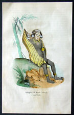 845 Dally Antique Print a Man of the Island of New Ireland, New Guinea