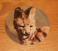 Interpol Sticker 2-Sided Original 2007 Round Promo 3� Hyena