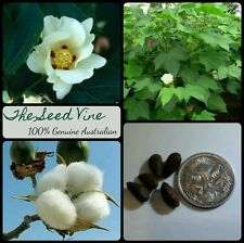 5 COTTON SEEDS (Gossypium Hirsutum) Fast Growing Flowering Annual Bush