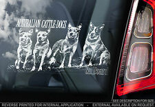 Australian Cattledogs - Car Window Sticker - ACD Cattledog Cattle Dog - TYP1