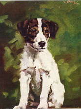JACK RUSSELL SMOOTH FOX TERRIER PUPPY LOVELY IMAGE OLD 1934 DOG ART PRINT