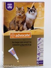 Advocate for Cats over 4kg 6pk