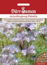 Gründüngung Phacelia tanacetifolia Bienenfreund Bienenweide Büschelblume 10m²