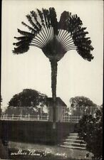 Singapore? Weller's Palm c1915 Real Photo Postcard