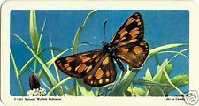 RED ROSE TEA CARD, SERIES: BUTTERFLIES OF NORTH. AMERICA, ARCTIC SKIPPER