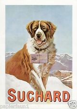 Suchard Milka Schokolade XL Reklame von 1909 !!! Bernhardiner Hund Ad chocolate