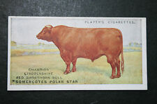 Lincolnshire Red Shorthorn Cattle   Original 1915 Vintage Picture Card   VGC