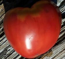 Tomato Seeds 35 - Giant Ox heart - Heirloom