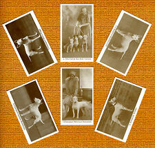 Bull Terrier Named Set Of 6 Dog Photo Trade Cards