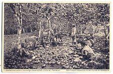 """K 129-Camerun 1. pflanzungs società """"Viktoria"""" - abbattimento del semi di cacao"""