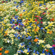 400 Wildflower Mixture Seeds Annual Easily to Start Interesting Planting TT008