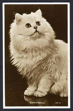 SNOWBALL a WHITE CAT Real Photo Postcard 1957 Long Hair Kitten Kitty