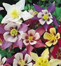 500 Columbine Mckanas Giant Flower Seeds